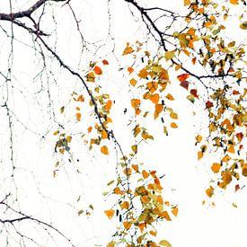 Herfstblaadjes van D. Henriquez