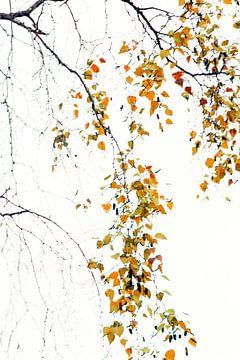 Herfstblaadjes von D. Henriquez
