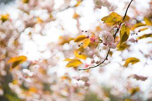 Zoete herfstkleuren in de lucht
