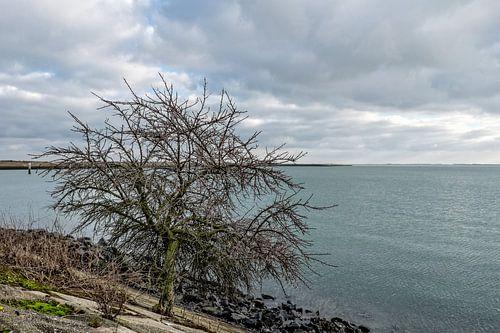 Tree on Dam van