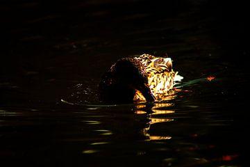 Concept nature :  The swimming duck van Michael Nägele