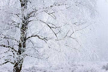 Winterbaum von Karijn Seldam