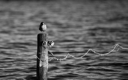 Bird-on-a-stick