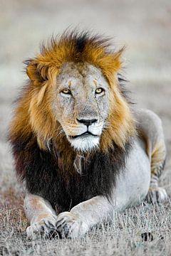 Leeuw Man van Peter Michel