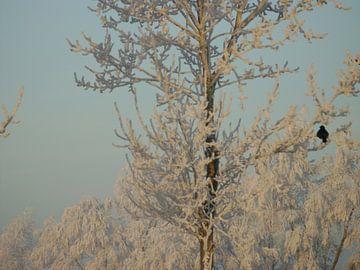 Winter wonder land 2 sur