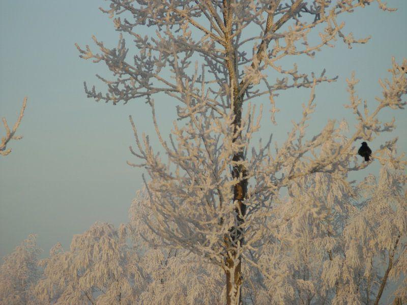Winter wonder land 2 van Hyppy Picture