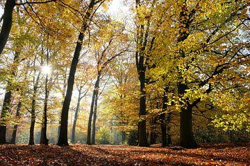 Herfst sur Jeroen te Lindert