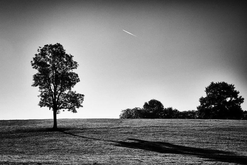 De boom en de schaduw van Hermen Buurman