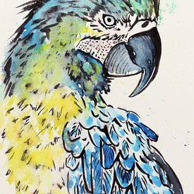 L'aras bleu-jaune perroquet sur Natalie Bruns