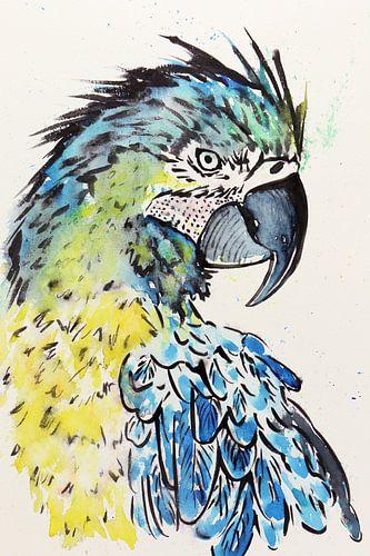 De blauwgele ara papegaai