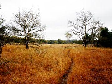 Trail op de Ginkelse heide van SenV2312 .