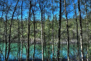 Natur: Bäume an einem See von Jarno De Smedt