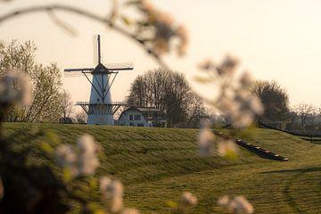 Mahlen Sie den Schmetterling, die Perle der Betuwe, zwischen den Blüten von Moetwil en van Dijk - Fotografie