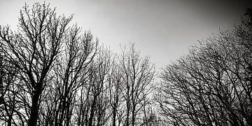 Winterse Bomen in Zwart Wit von Steven Otter