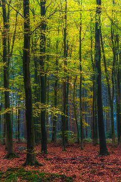 "Waldlandschaft ""Herbstwald"" von Coen Weesjes"