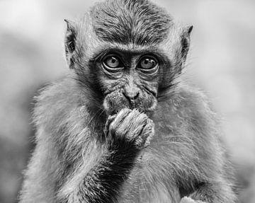 Junger Affe in Ubud, Indonesien, Schwarz-Weiß von Maureen Materman