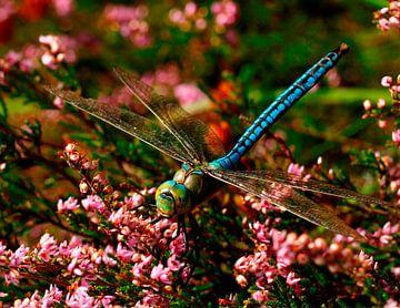 Libelle van Bernadette Struijk