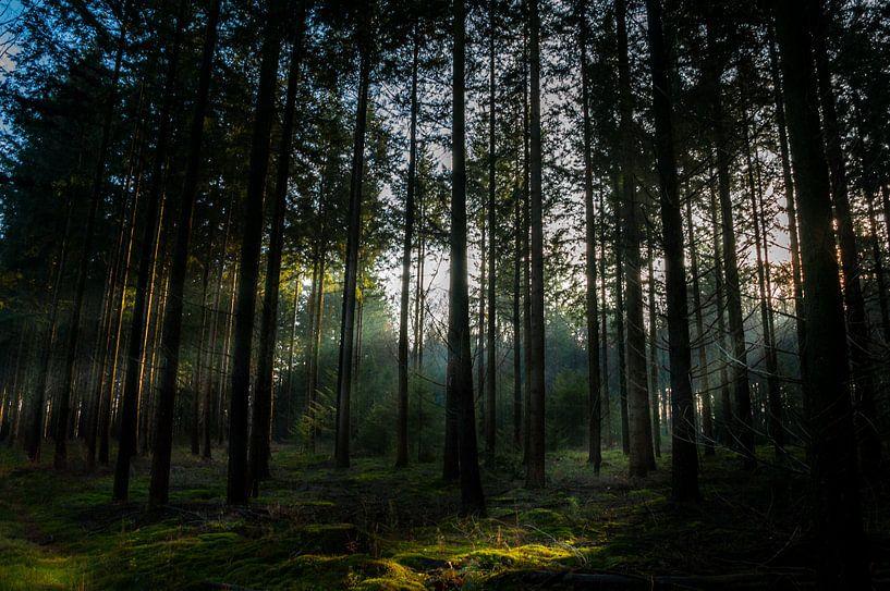 Zonnestralen in het bos van Jan Diepeveen