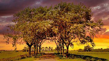 Bäume Tunnel von Digital Art Nederland