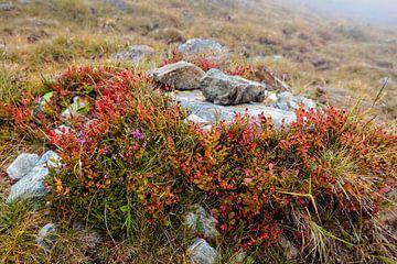 Alpine Fauna von Rob Boon