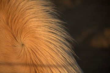Paarden manen van Sanne Willemsen