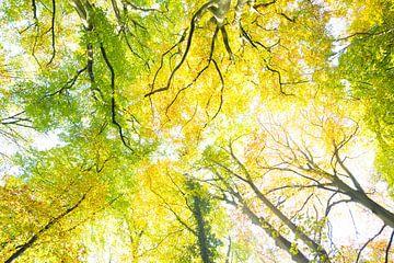Herfstbladeren van Wendy Drent