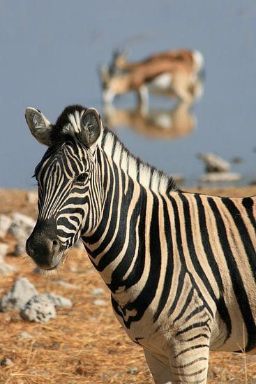Zebra bij een waterpoel van Antwan Janssen