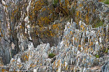 gele korstmossen op grijze steen van