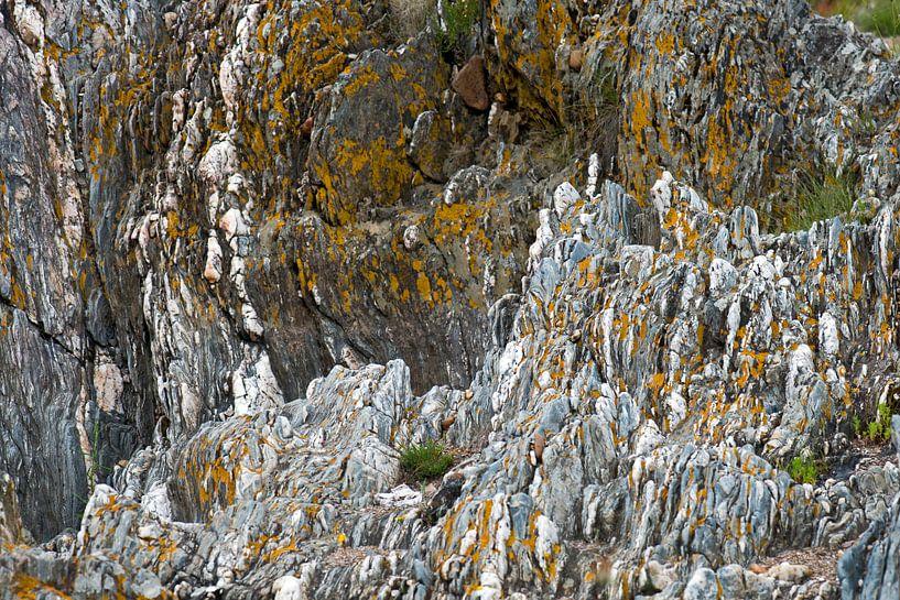 gele korstmossen op grijze steen van Hanneke Luit