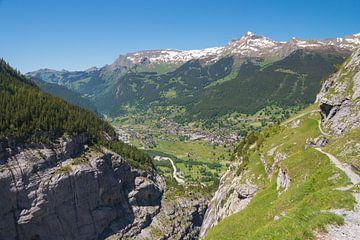 Kieswald im Tal, Schweiz von Peter Apers