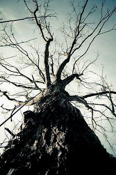Dunkler Baum von Davy Hansen