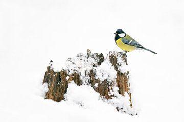 Koolmeesje in de sneeuw op een boomstam. van Albert Beukhof
