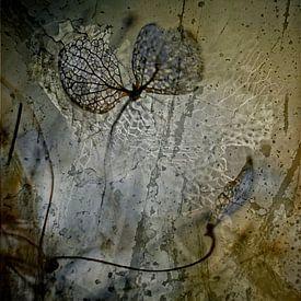 Skelett Blatt  Hydrangea    von Marlies Prieckaerts