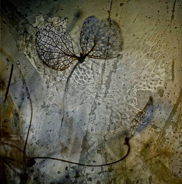 Herfsthortensia van Marlies Prieckaerts