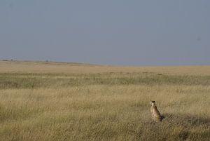 Jachtluipaard op de uitkijk