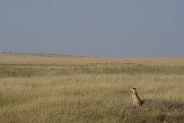 Jachtluipaard op de uitkijk van Tim Kolbrink