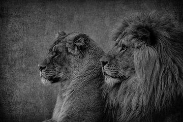 Löwen: Löwe und Löwin Paar in schwarz-weiß von Marjolein van Middelkoop