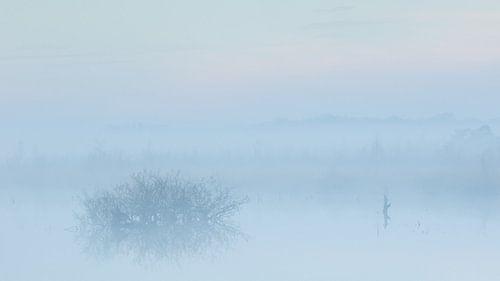 Mist in de vroege ochtend over het water van