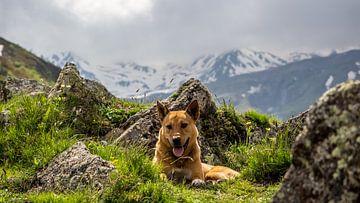Streunender Hund in den Bergen von Stijn Cleynhens