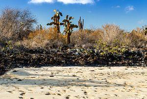 Galapagos eilanden van