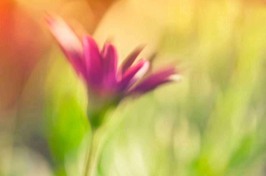 Één bloem