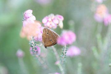Vlinder op heideplant. van Roel Bergsma