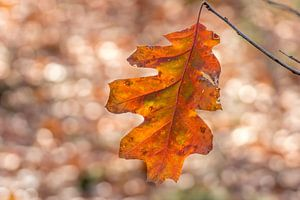 Herbstblatt von Marco Liberto