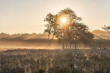 Eerste zonnestralen van de dag op de Bussumerheide van Michiel Dros