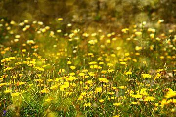 Lovely day..... van Silvia van Zutphen