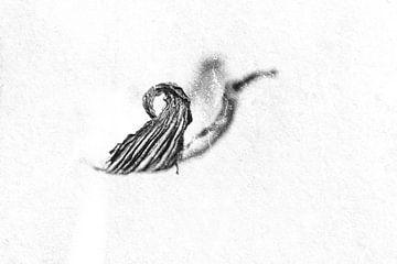 Kaninchenkeule in abstraktem Schwarz-Weiß von Elles Rijsdijk