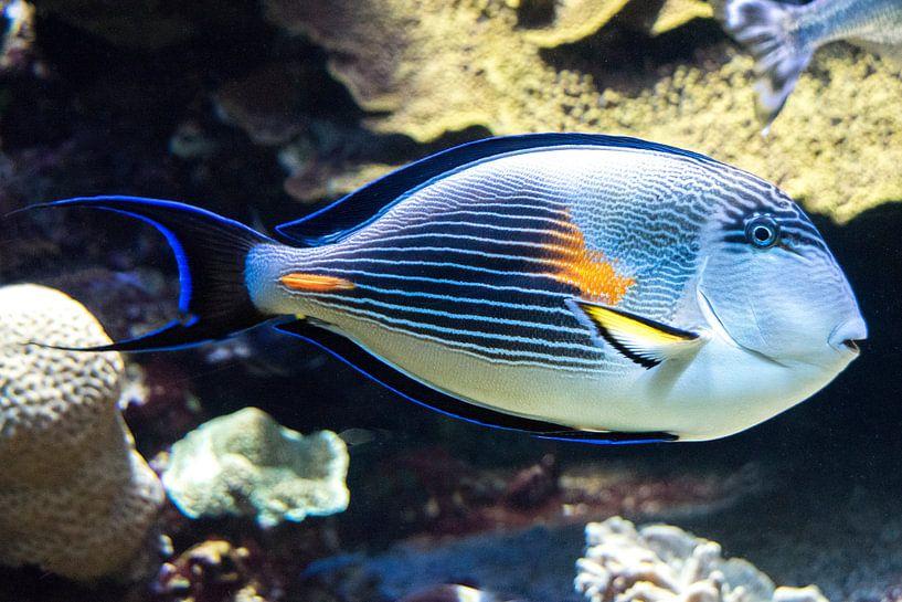 Tropische Vis van Michel Groen