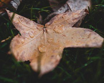 Herbstblatt mit Wassertropfen von Pim Haring