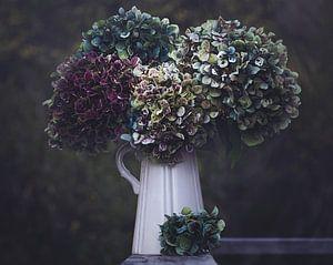 Hydrangeas in a vase van