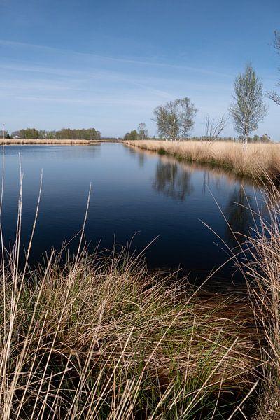 Bomen, Groen (kleur), takken, Lucht, Landschap, Bos (vegetatie), Lente van Eline Oostingh